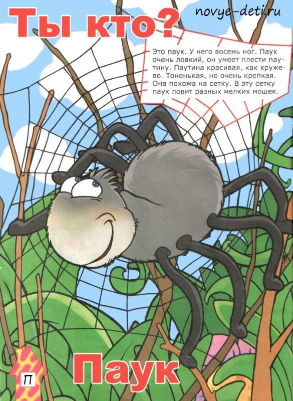 про пауков детям