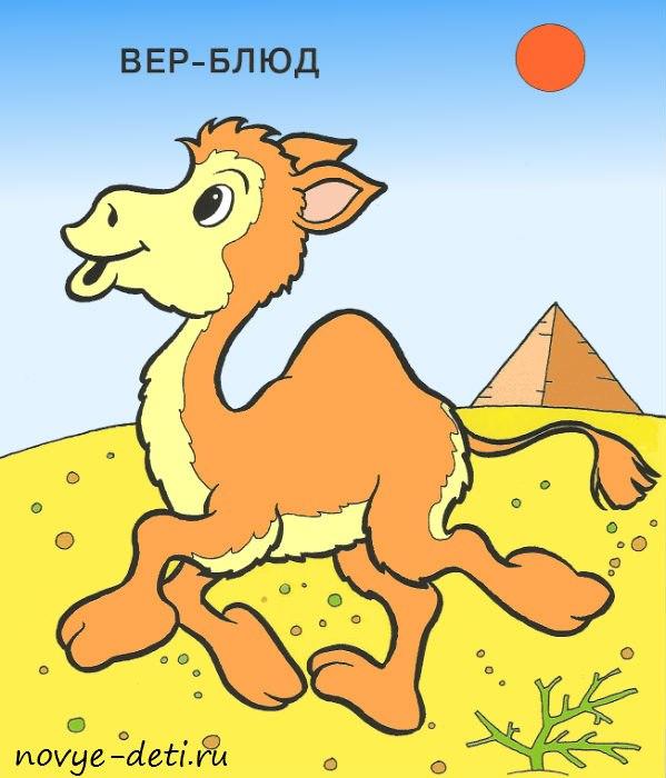 верблюд раскраска для детей