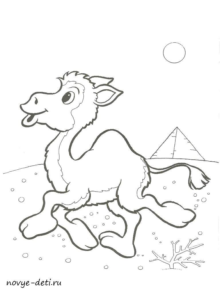 раскраска верблюд животные