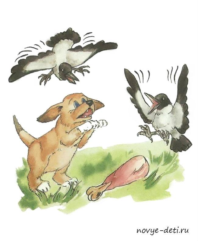 собака ворона картинки для детей