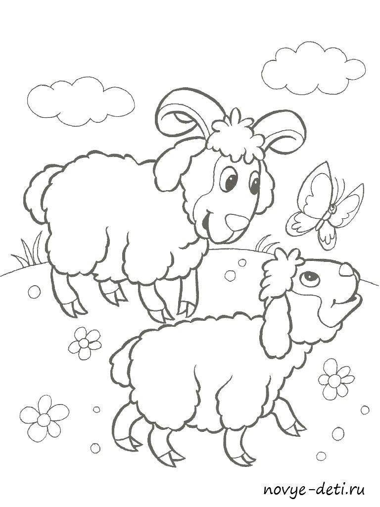 раскраска для малышей домашние животные овечки