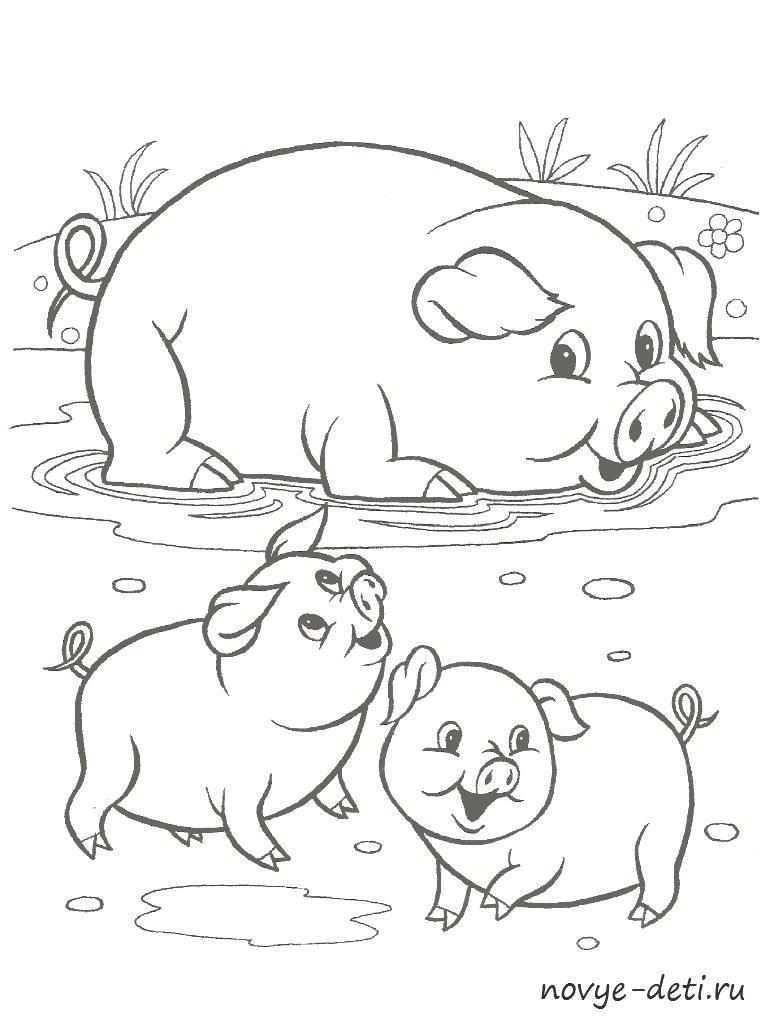 раскраска домашние животные свинья поросята